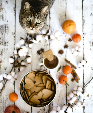 High Angle View Of Cat Standing By Heart Shape Cookies And Cottonの写真素材 [FYI04477183]