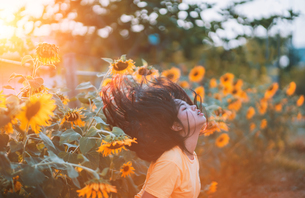 Side View Of Woman Tossing Hair In Sunflower Fieldの写真素材 [FYI04478919]