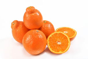 白背景のオレンジの写真素材 [FYI04482138]