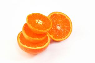 白背景のオレンジの写真素材 [FYI04482139]