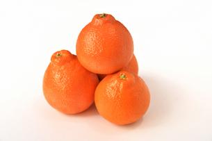 白背景のオレンジの写真素材 [FYI04482140]