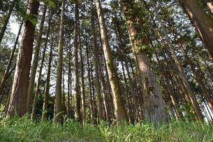 森の写真素材 [FYI04482208]