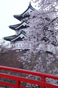 青森県弘前城と桜の写真素材 [FYI04482213]