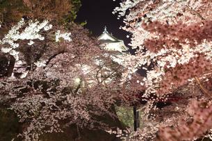 青森県弘前城の桜の夜景の写真素材 [FYI04482214]