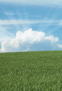 北海道美瑛の麦畑と太陽光の写真素材 [FYI04482215]