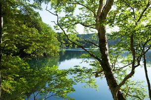 新緑の木々に囲まれたオンネトーの写真素材 [FYI04482494]