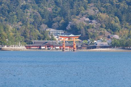 フェリーから眺める厳島神社の大鳥居の写真素材 [FYI04482497]