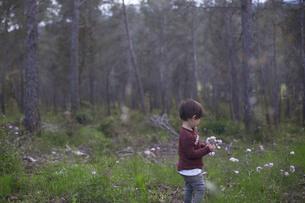 森でピンクの野の花を摘むハーフの子供の写真素材 [FYI04482510]
