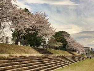 2020/3/27 誰もが待ちわびた春 SPRING 八王子市多賀公園のさくら の写真素材 [FYI04482516]