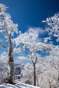 青空に映える霧氷の森(台高山脈(奈良県、三重県の県境))の写真素材 [FYI04482535]