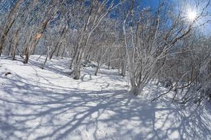 光さす霧氷の雑木林(奈良県吉野郡)の写真素材 [FYI04482538]
