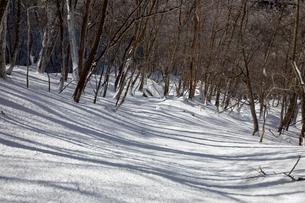 光さす冬の雑木林(奈良県吉野郡)の写真素材 [FYI04482539]