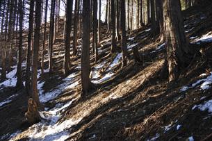 森の斜光線の写真素材 [FYI04482865]