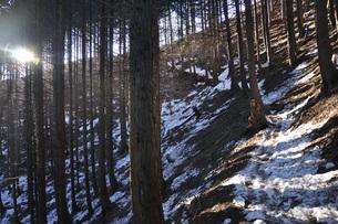 森の斜光線の写真素材 [FYI04482867]