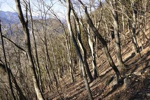 冬の朝の山地の写真素材 [FYI04482872]