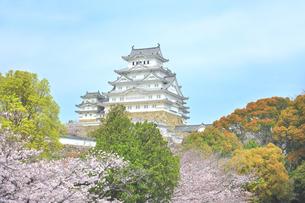 世界文化遺産 姫路城と桜の写真素材 [FYI04482926]