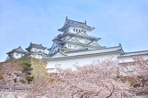 世界文化遺産 姫路城と桜の写真素材 [FYI04482928]