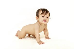 白背景を前に裸でハイハイしながら見つめる女の子の赤ちゃんの写真素材 [FYI04483196]