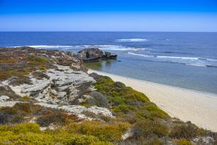 オーストラリア・西オーストラリア州のフリーマントルの沖合約18kmのインド洋に浮かぶロットネスト島のビーチと草が茂る景観の写真素材 [FYI04483308]