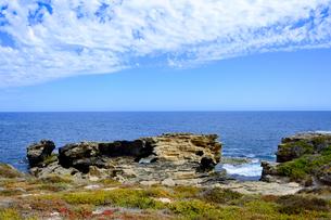 オーストラリア・西オーストラリア州のフリーマントルの沖合約18kmのインド洋に浮かぶロットネスト島の草が茂る岸辺と白い雲の景観の写真素材 [FYI04483310]