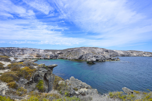 オーストラリア・西オーストラリア州のフリーマントルの沖合約18kmのインド洋に浮かぶロットネスト島の草が茂る岸辺と白い雲の景観の写真素材 [FYI04483343]