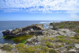 オーストラリア・西オーストラリア州のフリーマントルの沖合約18kmのインド洋に浮かぶロットネスト島の草が茂る岸辺と白い雲の景観の写真素材 [FYI04483346]