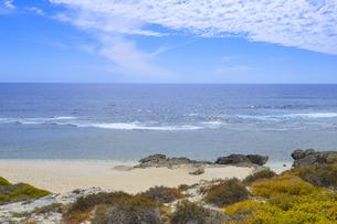 オーストラリア・西オーストラリア州のフリーマントルの沖合約18kmのインド洋に浮かぶロットネスト島の草が茂る岸辺と白い雲の景観の写真素材 [FYI04483353]