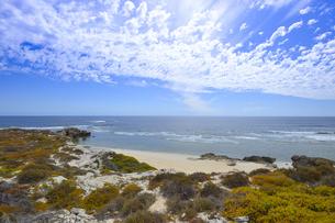オーストラリア・西オーストラリア州のフリーマントルの沖合約18kmのインド洋に浮かぶロットネスト島の草が茂る岸辺と白い雲の景観の写真素材 [FYI04483355]