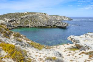 オーストラリア・西オーストラリア州のフリーマントルの沖合約18kmのインド洋に浮かぶロットネスト島の草が茂る岸辺と白い雲の景観の写真素材 [FYI04483362]