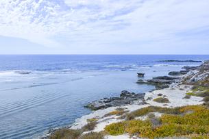 オーストラリア・西オーストラリア州のフリーマントルの沖合約18kmのインド洋に浮かぶロットネスト島の草が茂る岸辺と白い雲の景観の写真素材 [FYI04483378]