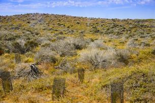 オーストラリア・西オーストラリア州のフリーマントルの沖合約18kmのインド洋に浮かぶロットネスト島の草が茂る中に苗床のある景観の写真素材 [FYI04483400]
