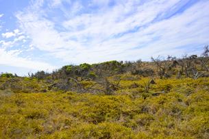オーストラリア・西オーストラリア州のフリーマントルの沖合約18kmのインド洋に浮かぶロットネスト島の草が茂る景観と白い雲の写真素材 [FYI04483403]