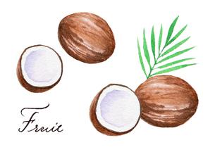 ココナッツのイラスト素材 [FYI04483410]