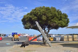 オーストラリア・西オーストラリア州のフリーマントルの沖合約18kmのインド洋に浮かぶロットネスト島のフェリー乗り場前の大きな木に掛けられたイカリと船に積みこむ荷物が並ぶ景観の写真素材 [FYI04483453]