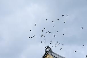 お寺から鳩の群れが飛び立つの写真素材 [FYI04484469]