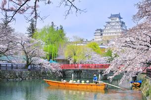 姫路城天守と桜に観光学習船の写真素材 [FYI04484546]