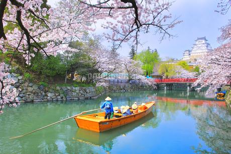 姫路城天守と桜に観光学習船の写真素材 [FYI04484548]