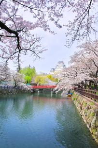 姫路城天守と赤い橋に桜の写真素材 [FYI04484549]