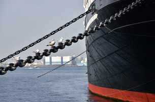 港で休む海鳥の写真素材 [FYI04484580]