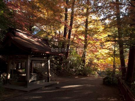 岐阜県 大矢田もみじ谷の秋の写真素材の写真素材 [FYI04484613]