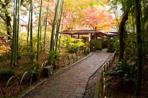 伊豆 修繕寺の秋の写真素材の写真素材 [FYI04484625]