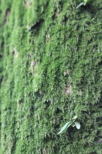 Fresh green in early summer - 苔と新芽の写真素材 [FYI04484645]