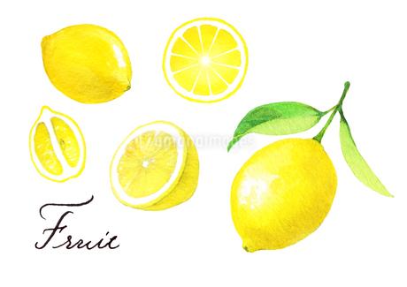 レモンのイラスト素材 [FYI04484956]