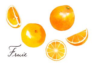 マンダリンオレンジ、ネーブルオレンジのイラスト素材 [FYI04484958]