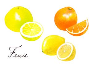 グレープフルーツ、レモン、オレンジのイラスト素材 [FYI04484959]