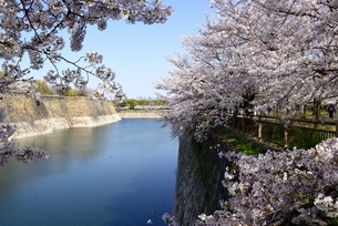 大阪城公園,満開の桜と南内堀の写真素材 [FYI04484969]