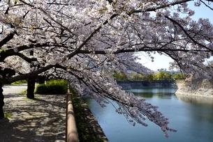 大阪城公園,満開の桜と南内堀の写真素材 [FYI04484970]