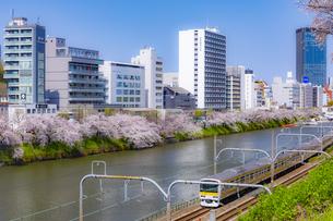 外濠沿いの桜並木とJR総武線の電車の写真素材 [FYI04485076]