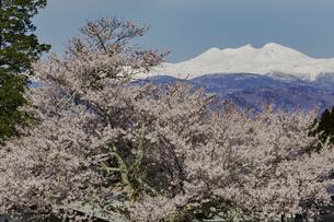 朝日村の桜と残雪の乗鞍岳の写真素材 [FYI04485188]