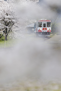 樽見鉄道谷汲口駅の桜風景の写真素材 [FYI04485192]